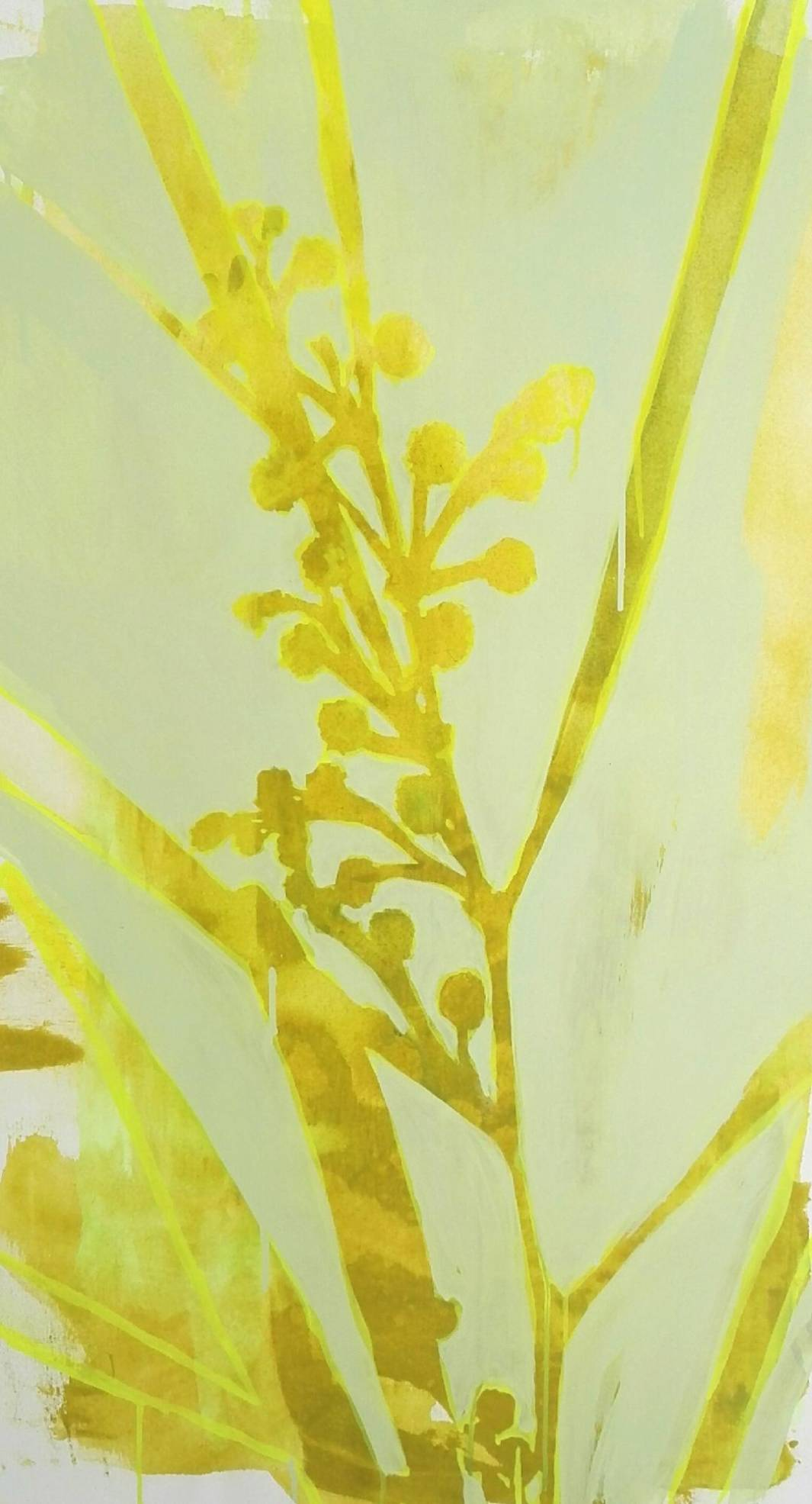 2018 Mimose 50x80